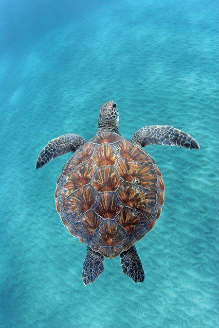 Drawn sea life aquatic animal  ideas life (Hawaiian ocean