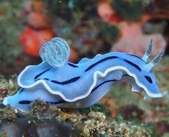 Drawn sea life aquatic animal Water Amazing 25+  life