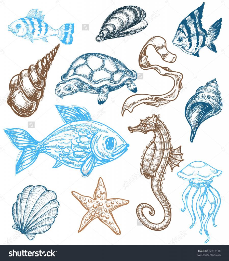 Drawn sea life aquatic animal Life Animal Draw Sketches Draw