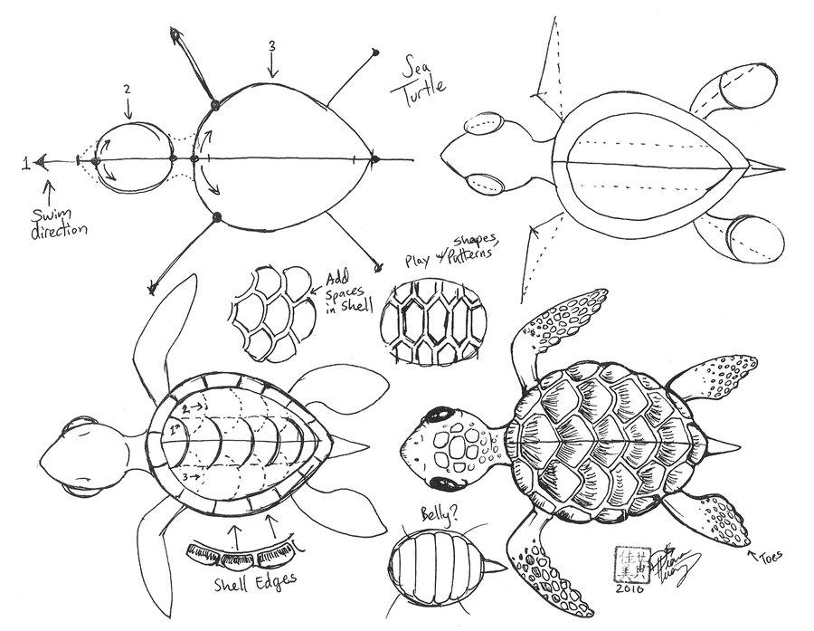 Drawn sea turtle line drawing 20+ Sea on head deviantART