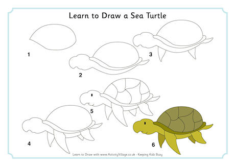Drawn sea life beginner Draw Draw Turtle Learn Sea