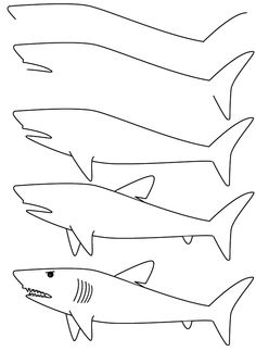 Drawn sea life beginner  Patterns and By Step