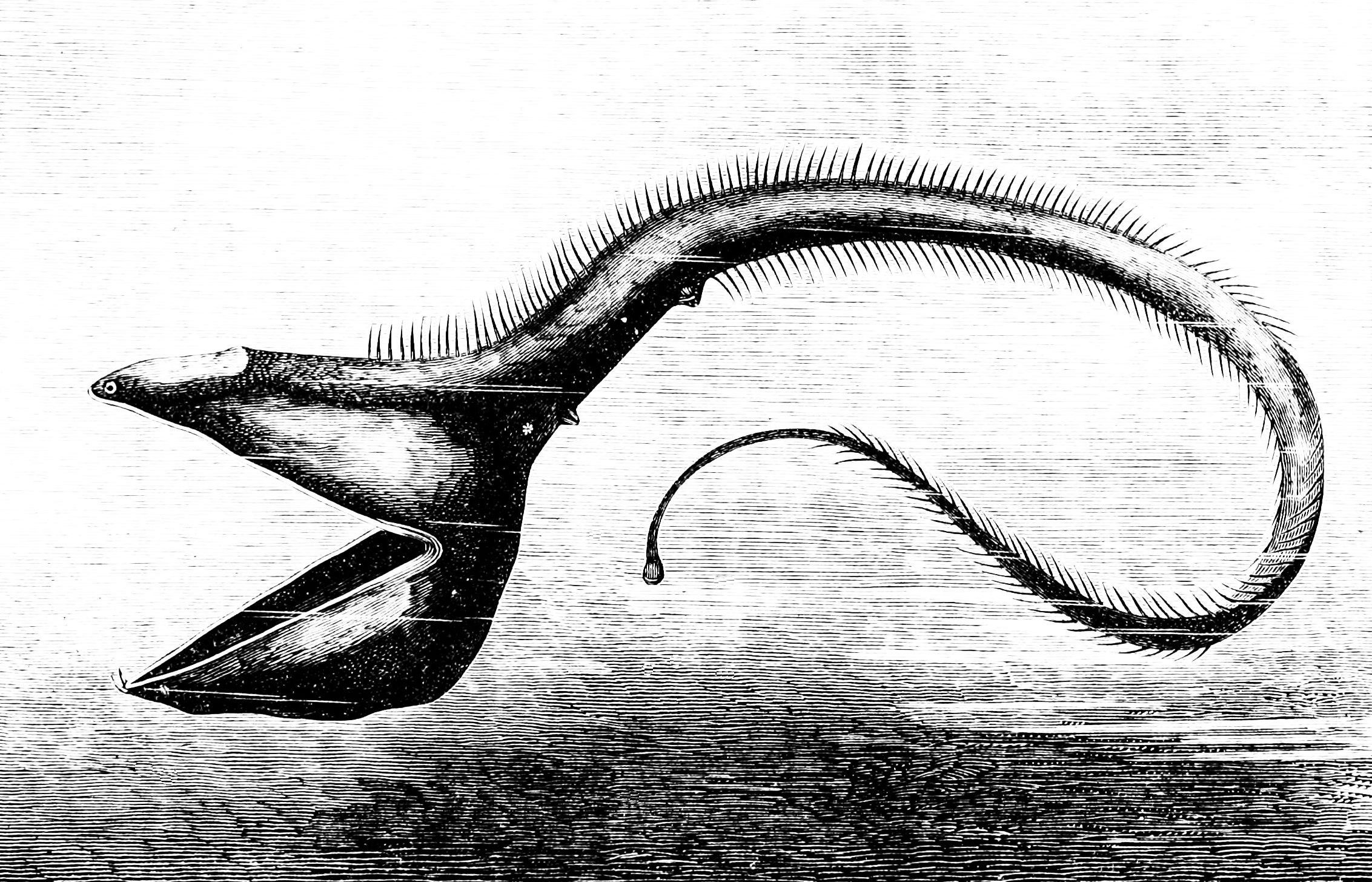 Drawn sea life deep sea creature News Deep  there deep