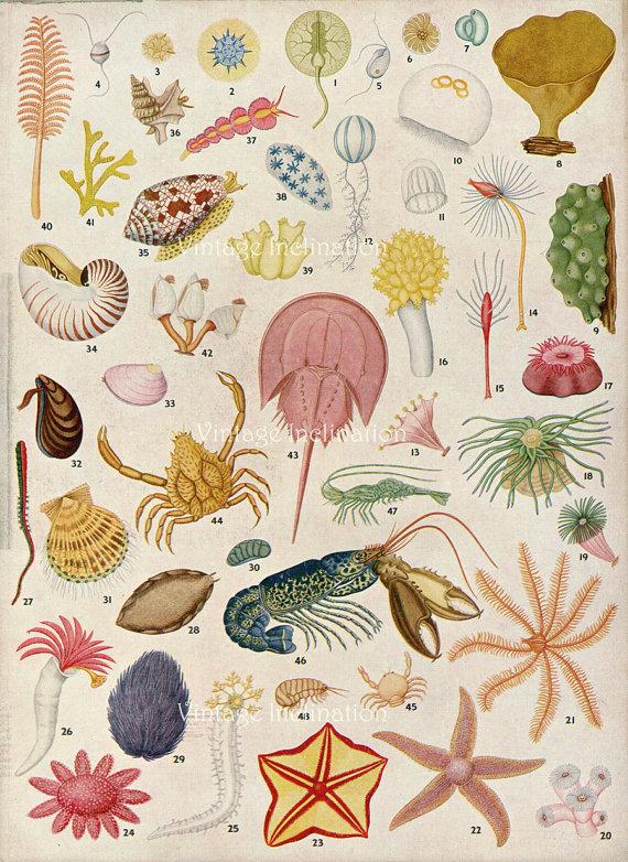 Drawn sea life hammer Sea original life ocean original