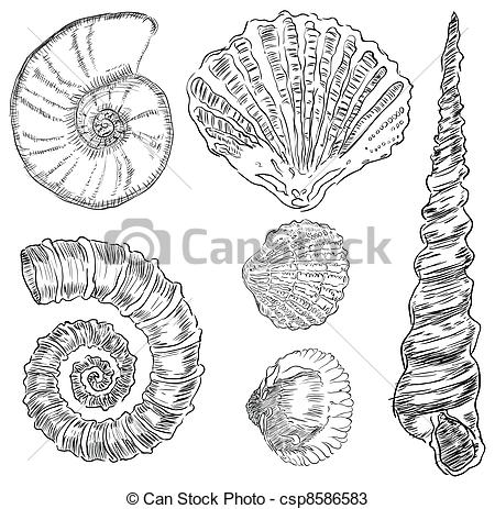Drawn sea life underwater Marine Species drawing Search of