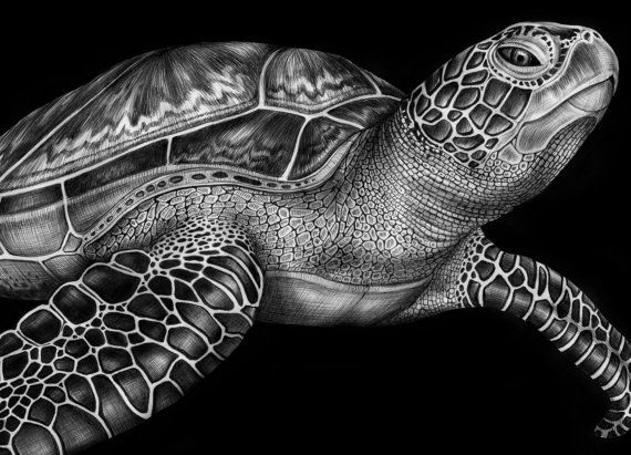 Drawn sea turtle realistic Pinterest Ink Turtle Art Turtle