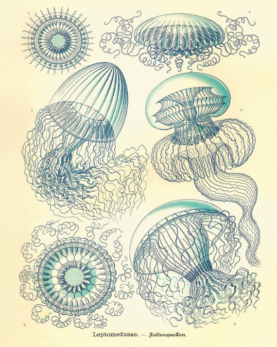 Drawn sea life nature Old ideas History Ocean art