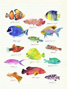 Drawn sea life nature  Illustration george Marcel more