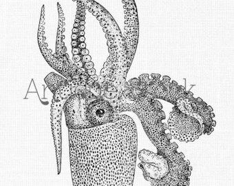 Drawn sea life octopus Old Sea Vintage life Life