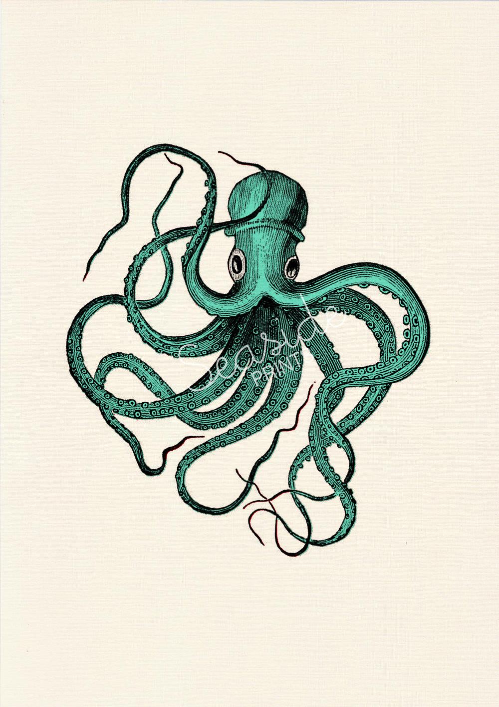 Drawn sea life octopus Wall sea color Print art