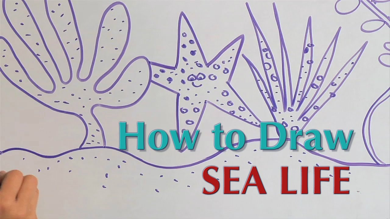 Drawn sea life pencil for kid Guided Great Great How Life