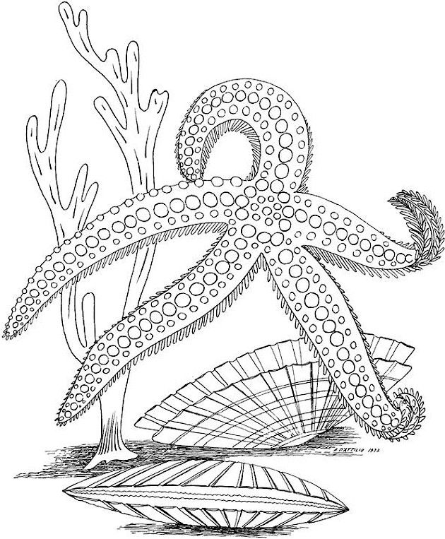 Drawn sea life printable Pages 25+ Colouring Pinterest ideas