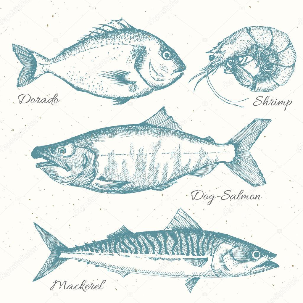 Drawn sea life ray fish — Vector © Vector hand