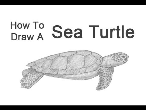 Drawn sea life realistic drawing To  How Turtle YouTube