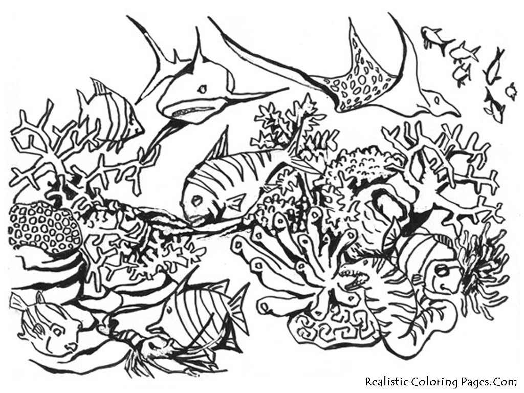 Drawn sea life line drawing Free Ocean Life Ocean Pages