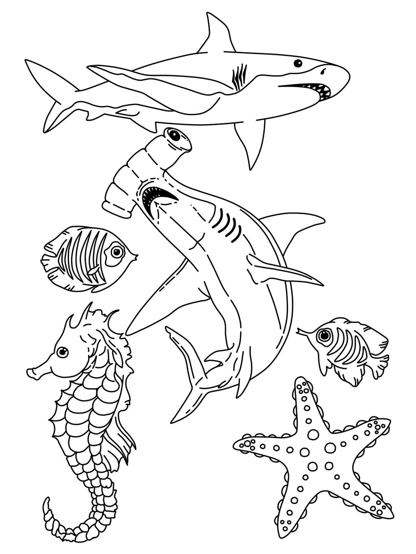 Drawn sea life realistic drawing On RhiannonHasRegrets by Sea Life
