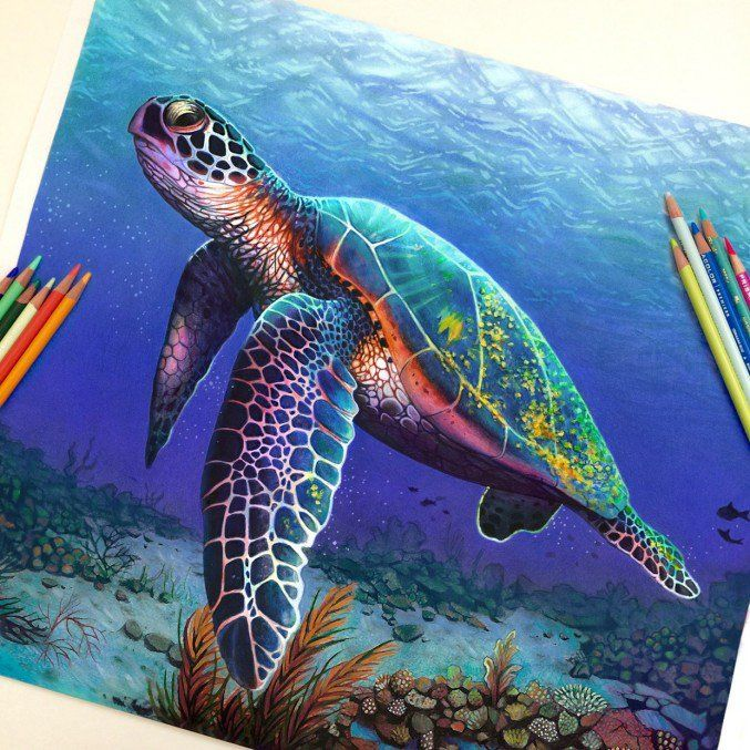 Drawn sea turtle realistic Ideas art a Drawings of