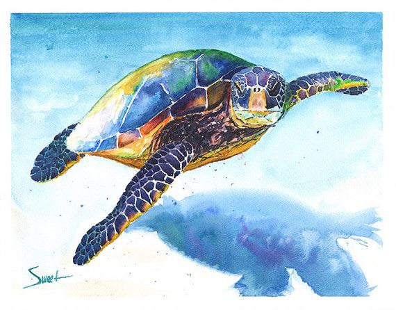 Drawn sea turtle underwate animal 39 turtle sea decor Paintings
