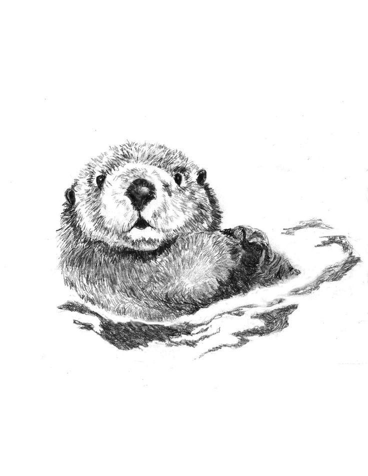Drawn otter pencil drawing Items Otter TattooLittle SwimmersSea on
