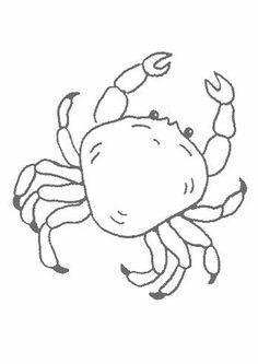 Drawn sea life sea crab FREE Sea animals a by