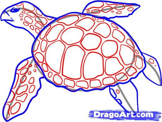 Drawn sea turtle draw a Sea Sea Turtle for Cute