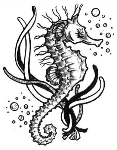 Drawn sea life seahorse Life Sea Sea Creature Simple