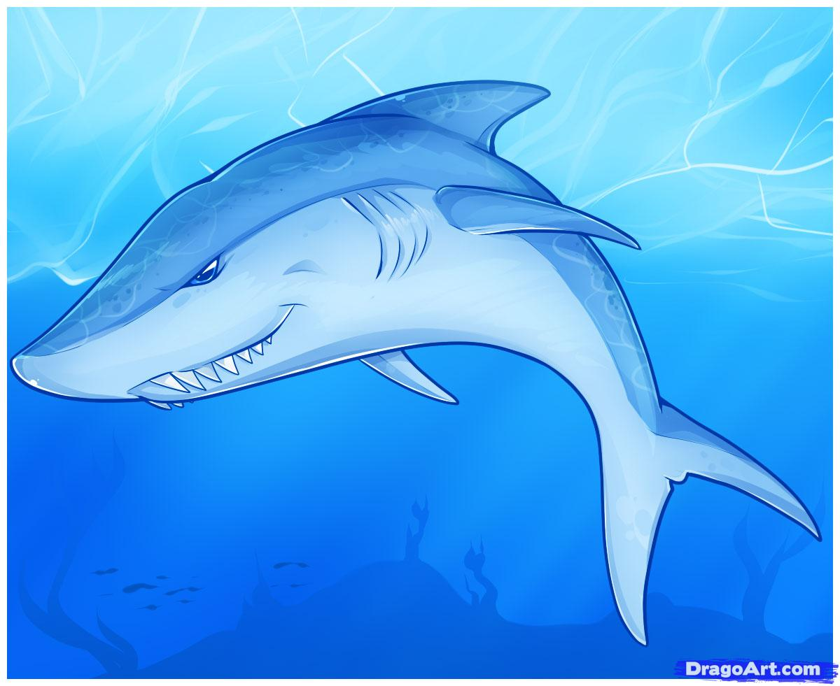 Drawn shark graffiti Step Draw by an Shark