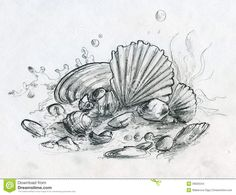 Drawn sea life underwater Drawings  shells (2012) LifeTowelsSketchesDrawings