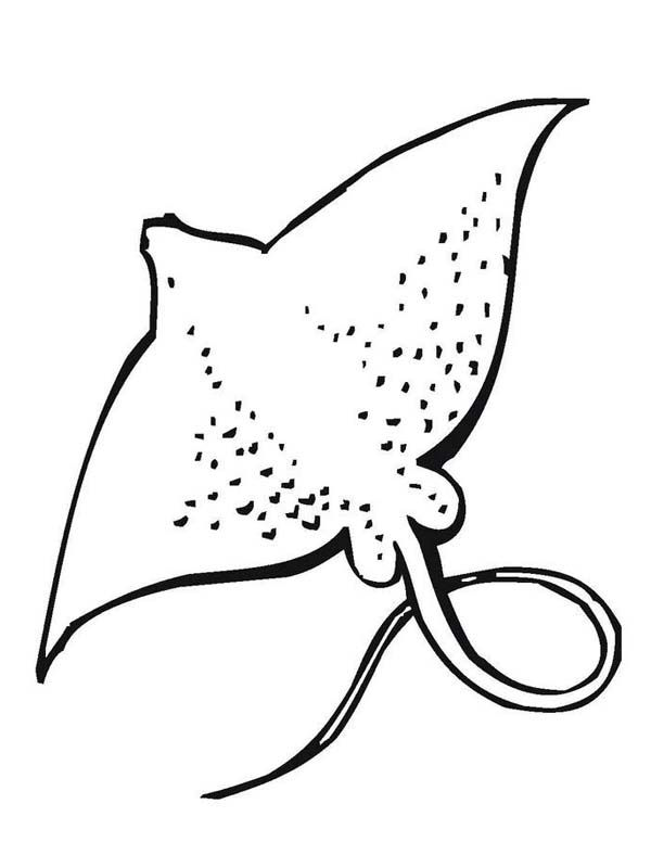 Drawn sea life stingray Life best pages 93 images