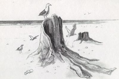 Drawn sea pencil drawing Driftwood on driftwood gulls beach