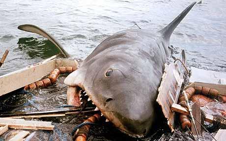 Drawn sea shark attack Caught 'ignored warnings shark Egypt