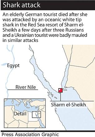 Drawn sea shark attack To animals a Sharm ship