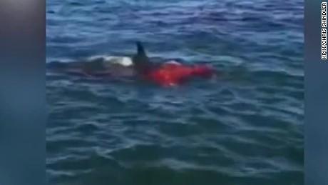 Drawn sea shark attack Hit CNN shark in attacks