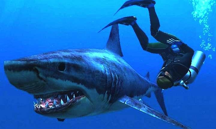 Drawn sea shark attack Shark The with three the