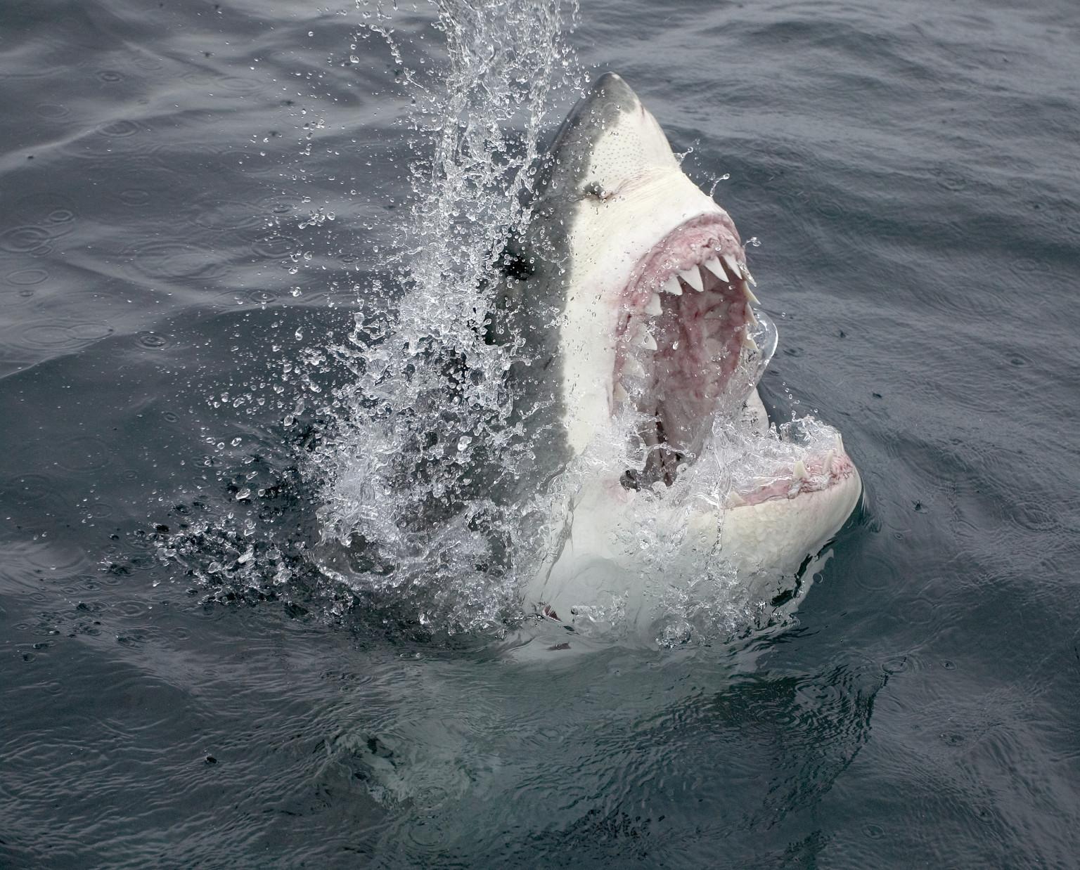 Drawn sea shark attack HuffPost Sharks Sea In Target