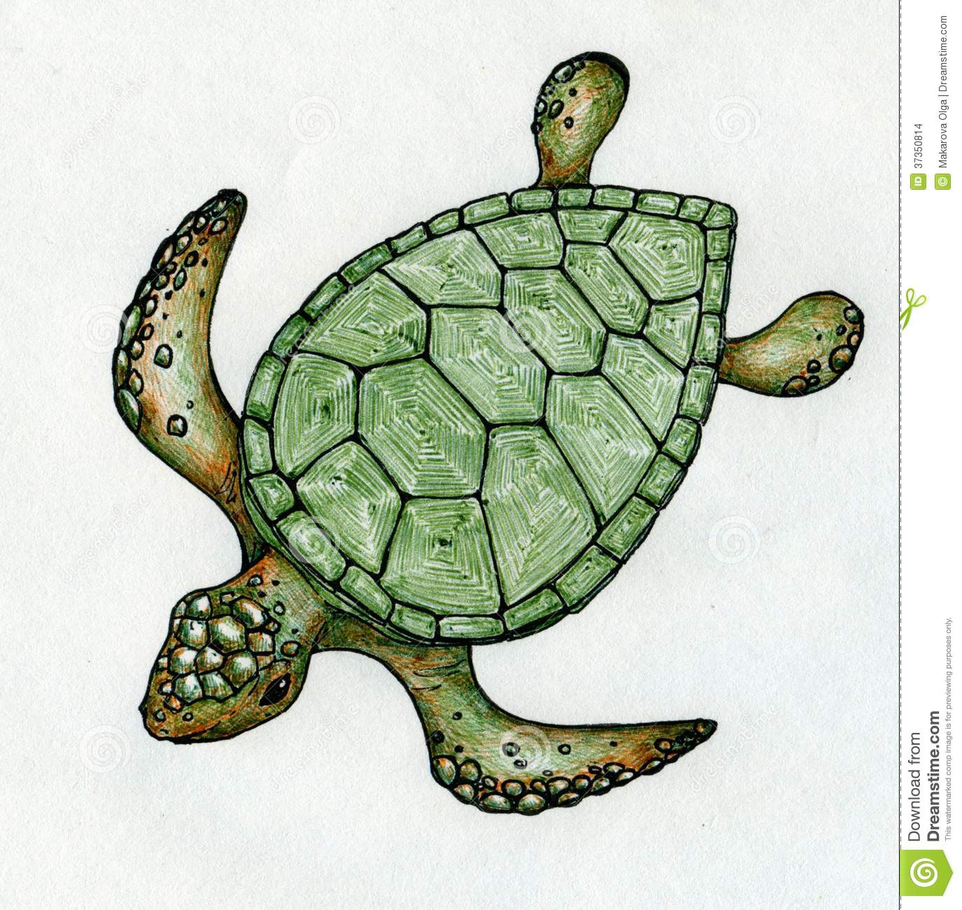 Drawn shell pen drawing Turtle Swimming Drawing Shell Of