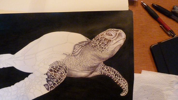 Drawn sea turtle beginner Drawing available my com/listing/172130964/green of