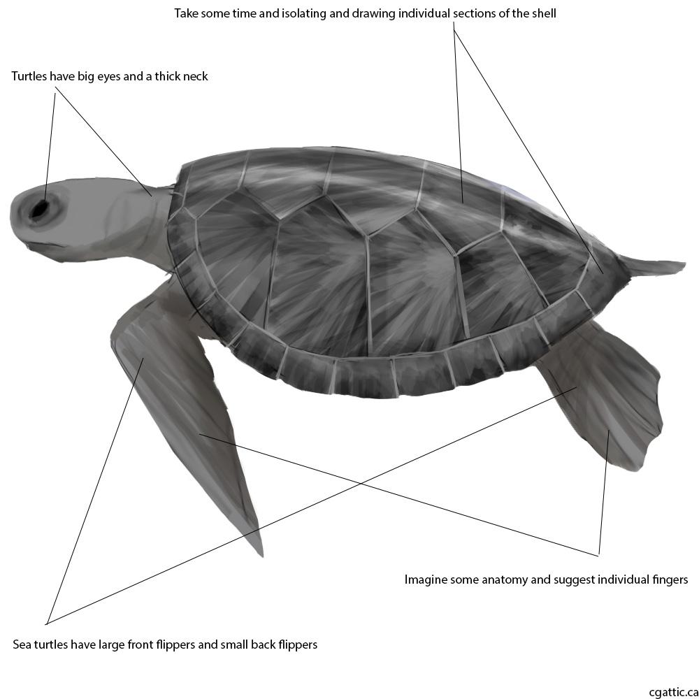 Drawn sea turtle big eye Ca Turtle! for Turtle Guide: