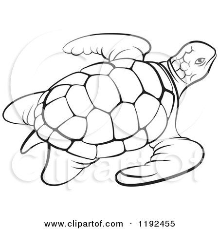 Drawn sea turtle black and white And sea Black  Turtle