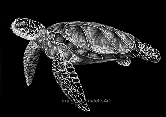 Drawn sea turtle black and white Ink to Artist* *Signed