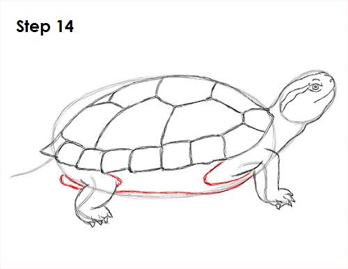 Drawn sea turtle box turtle (Red Draw Slider) Turtle Draw