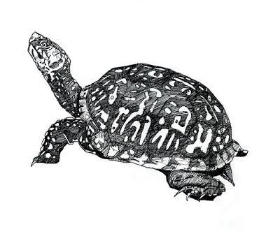 Drawn sea turtle box turtle Turtle Box Box Box turtle