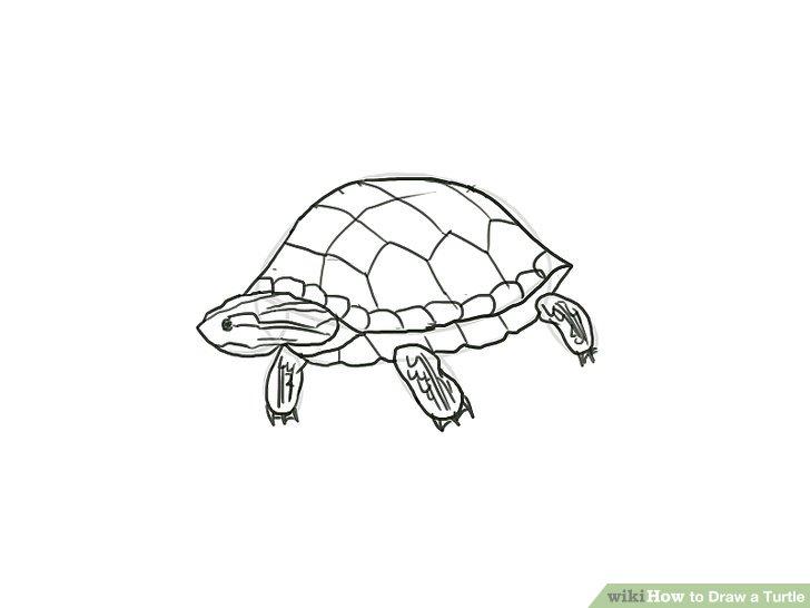 Drawn sea turtle box turtle Ways Image Draw 4 Step