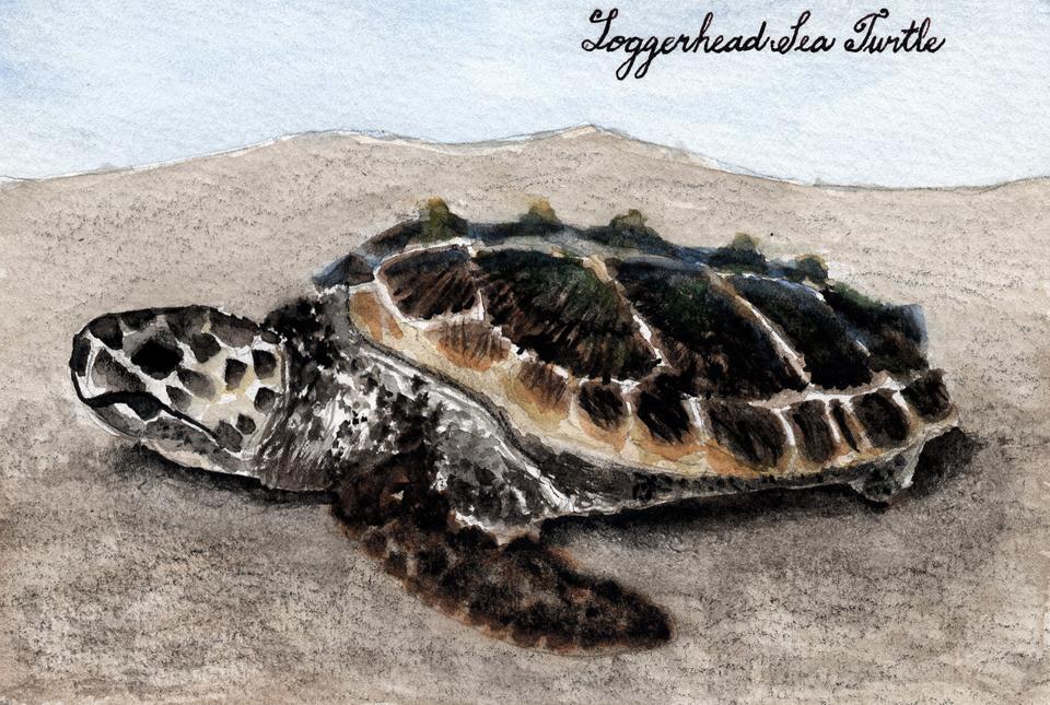 Drawn sea turtle face 04 2011 Sea 26