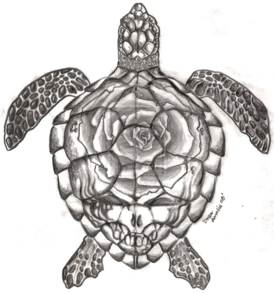 Drawn sea turtle face Sea Steal face turtle Steal