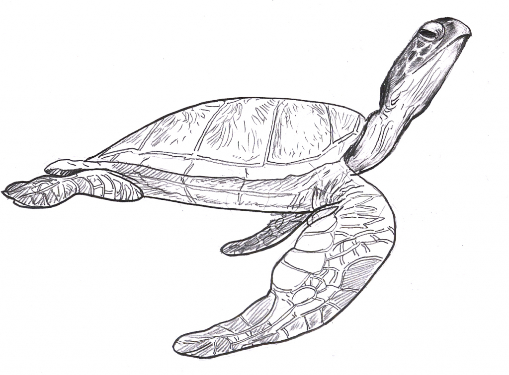 Drawn sea turtle face Sea Tag: to Turtle