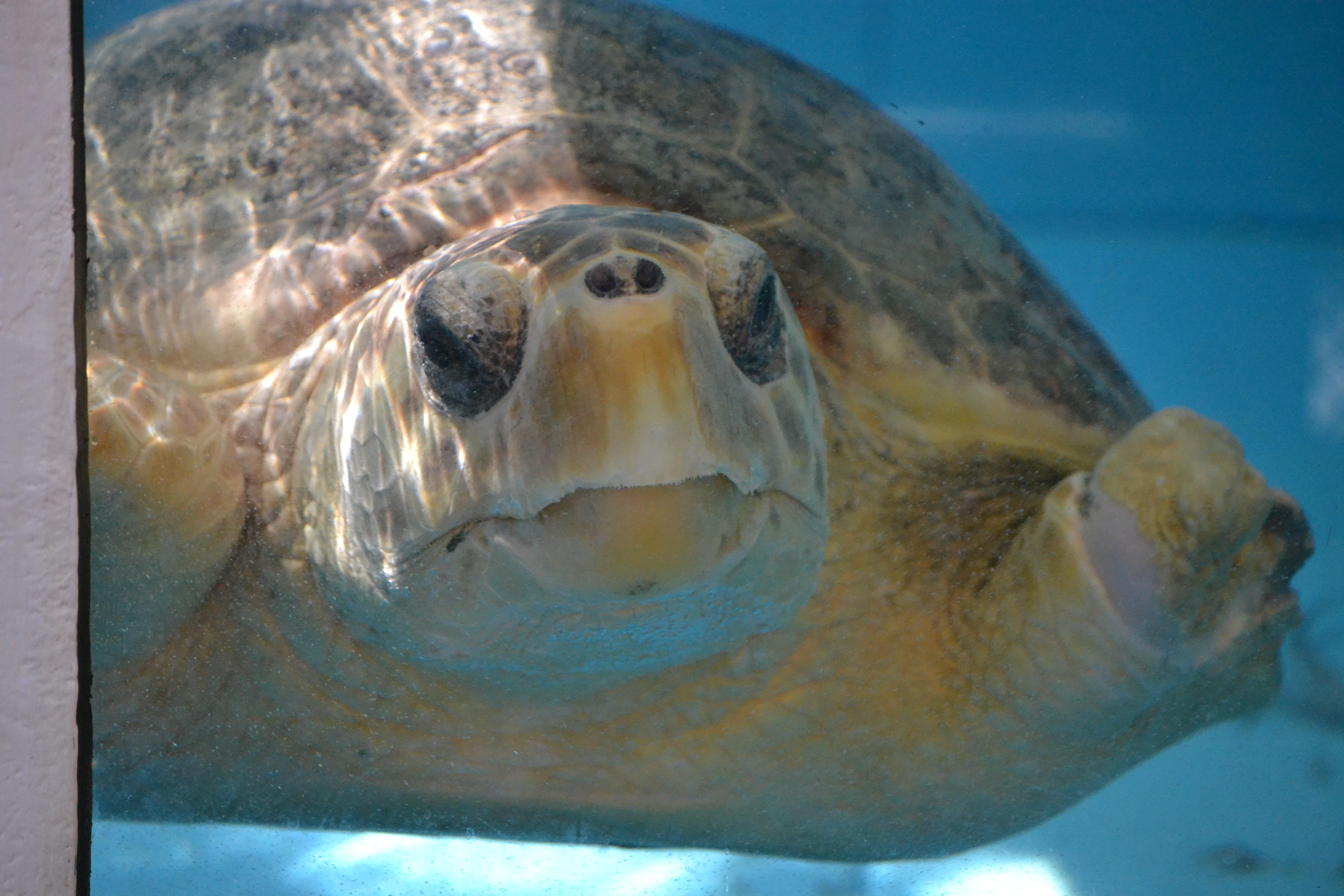 Drawn sea turtle face Photo#17 Turtle Sea Sea face