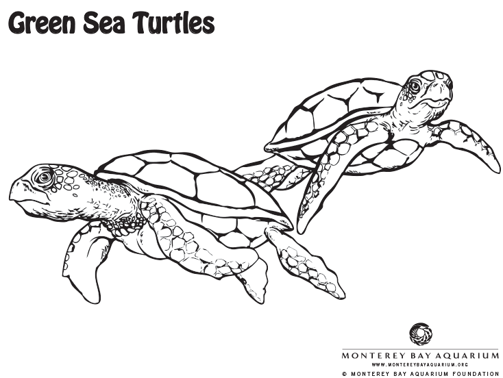 Drawn sea turtle florida Coloring  from the the