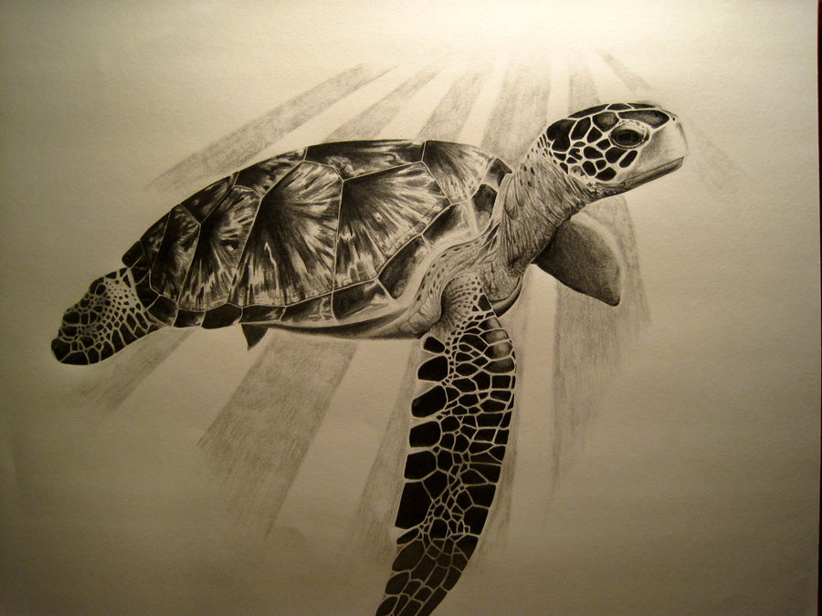 Drawn sea turtle graphite pencil Face Drawing Turtle turtle face