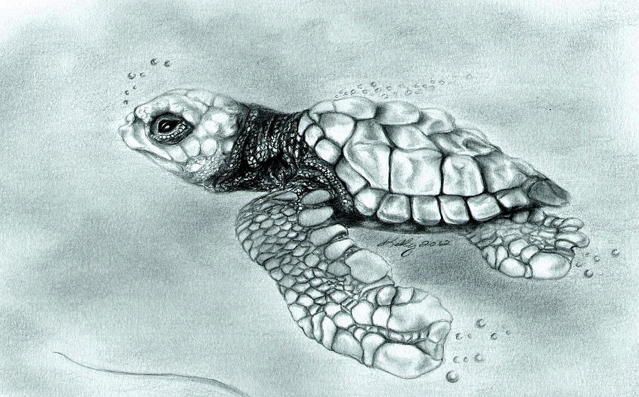 Drawn sea turtle graphite pencil Sea Turtle Baby Baby images